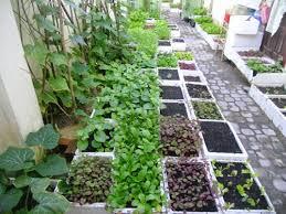 Các mẹo trồng rau trong thùng xốp đạt hiệu quả